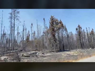 Forest burned