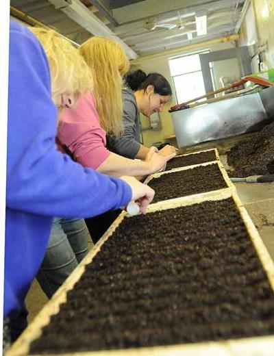 Seeding begins