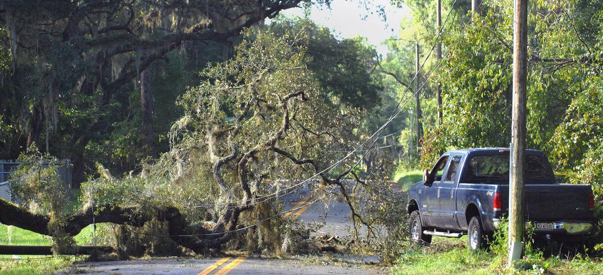 Irma power lines down