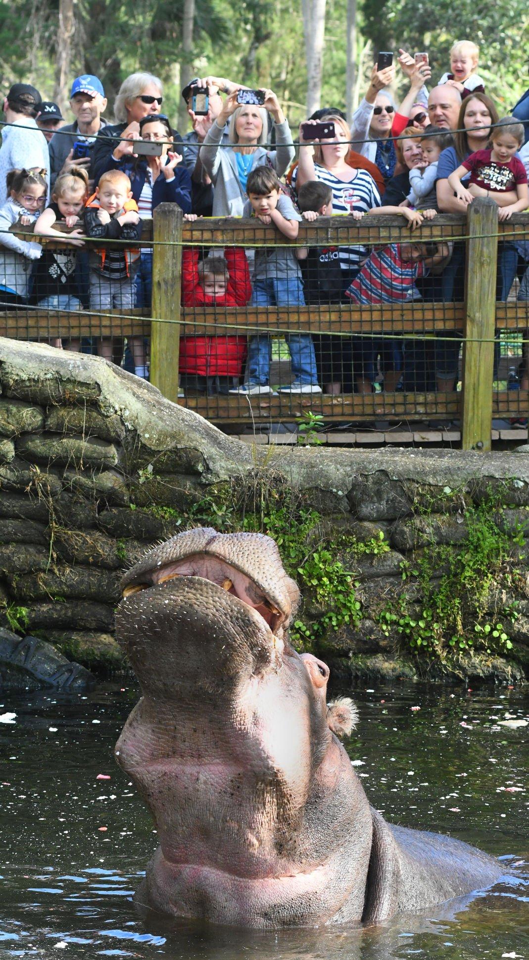 Wildlife park visitors celebrate 60 years with Lu