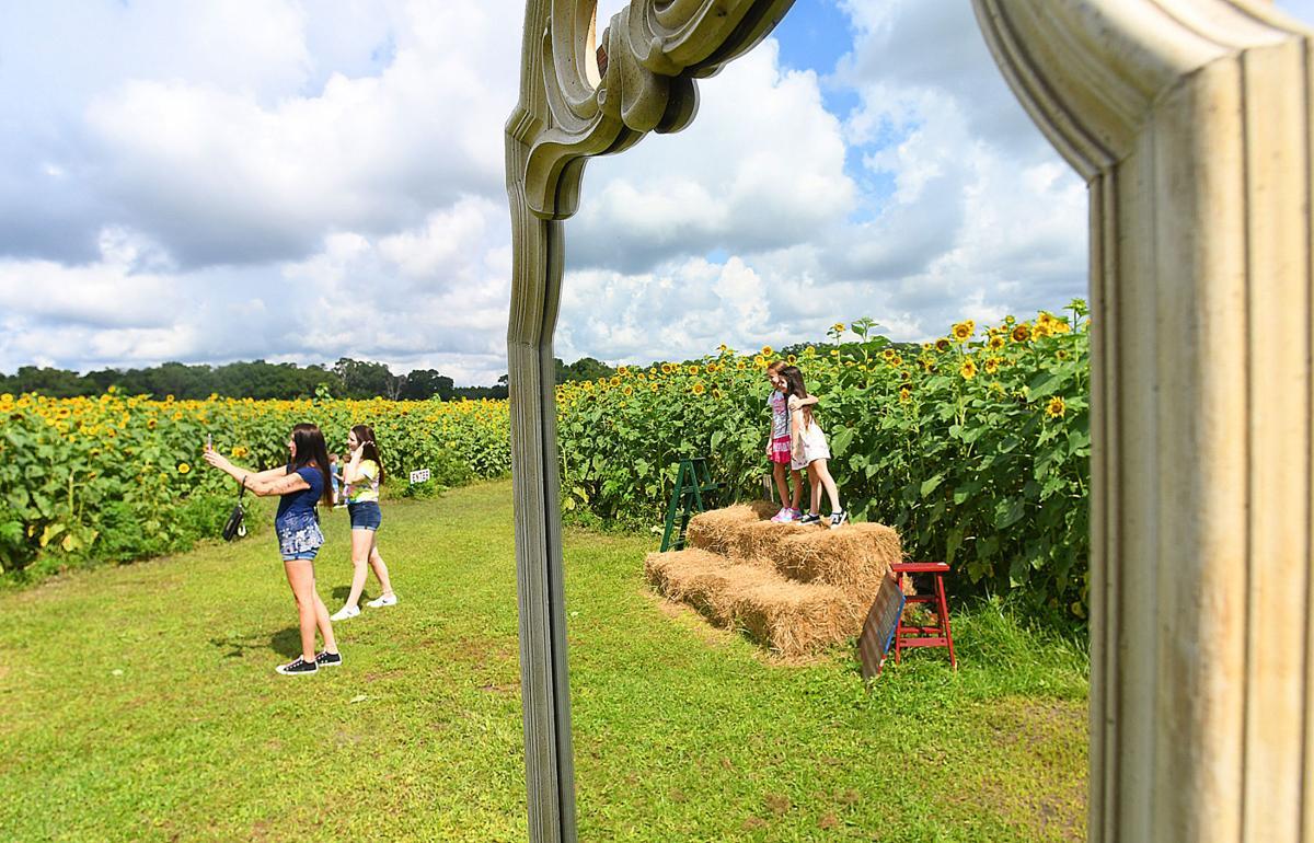 Cannon Farms 2