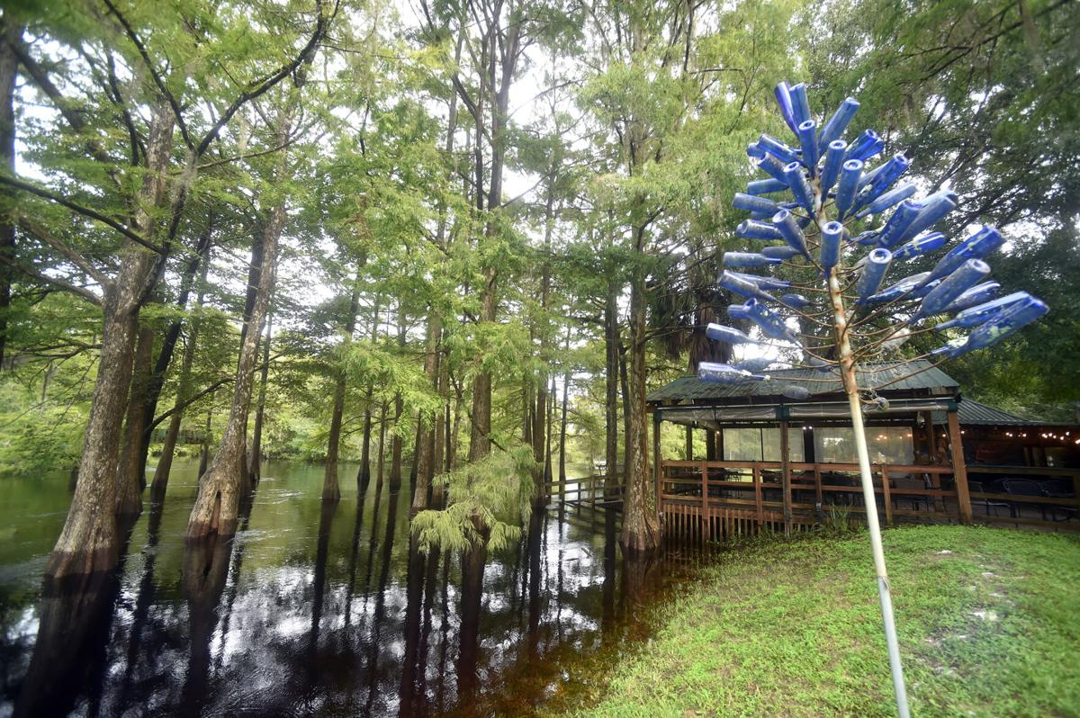 Withlacoochee River swelling