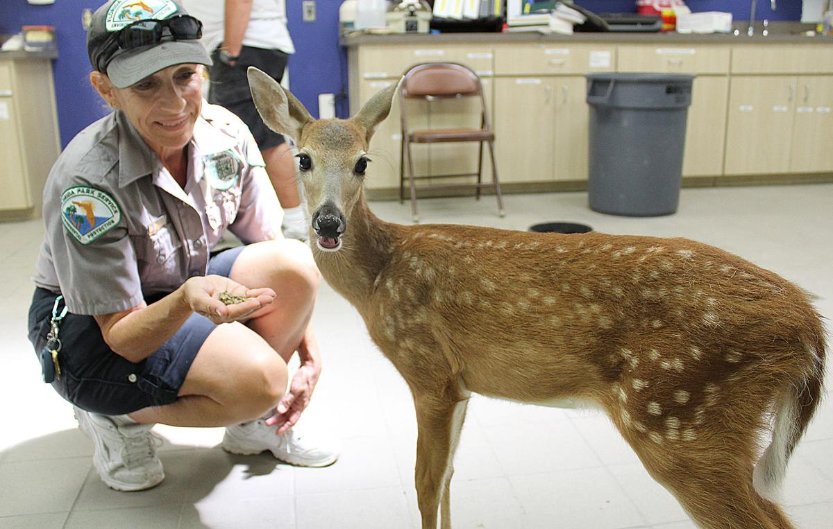 Fawning over Faline: Orphan finds home at wildlife park | Local News ...
