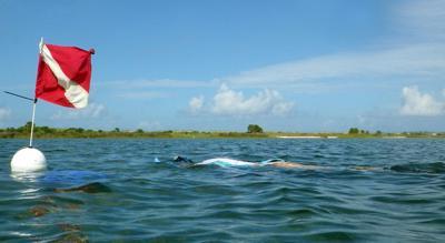 FWC Scallop Snorkeler