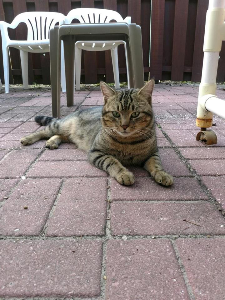 Feral cat's adventure ends, and a new one begins | Local News ... on squirrel home, chipmunk home, fast cat home, ferret home, mountain lion home, lizard home, duck home, pet cat home, dog cat home, stray cat home, cat lady home, pig cat home,
