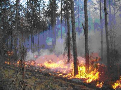 Arbor Culture 5/25/14: Controlled burns promote health of forest ecosystem