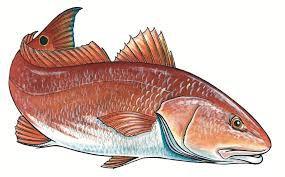 Redfish Tourn
