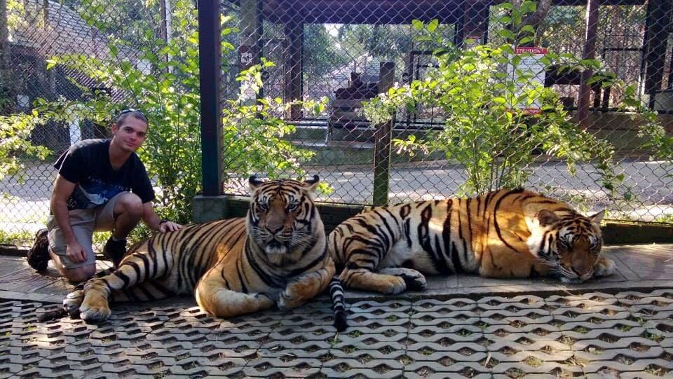 Sean Liebman with tigers