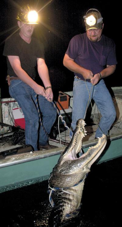 Alligator Trappers