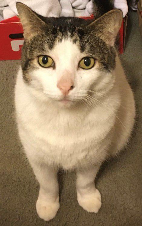 Tucker the lost cat