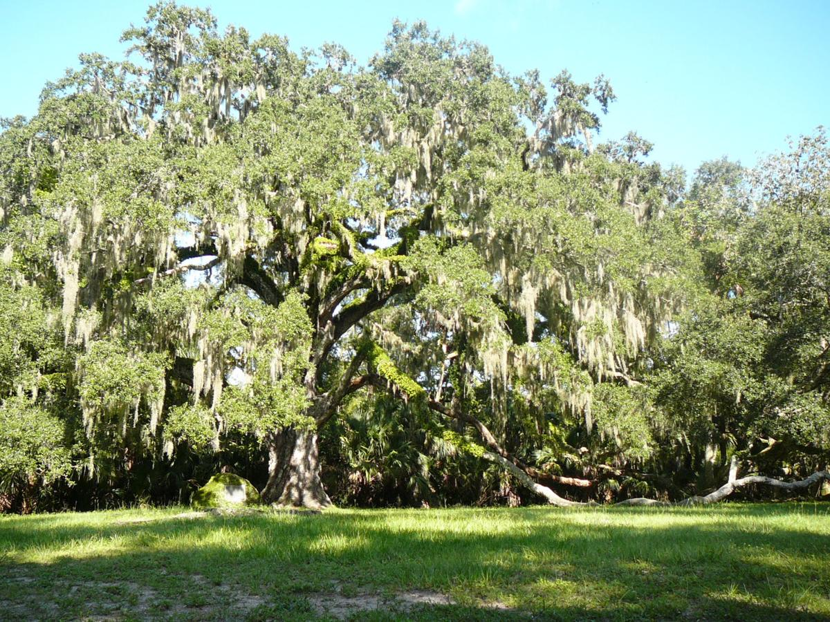 All About Oaks In Florida Real Estate Chronicleonline Com
