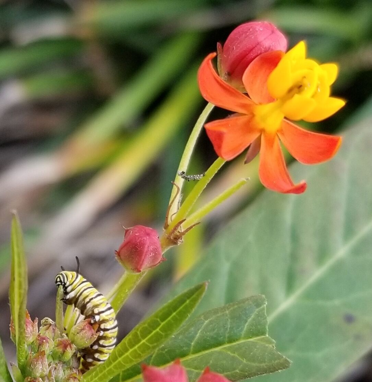 0124 caterpillar.jpeg
