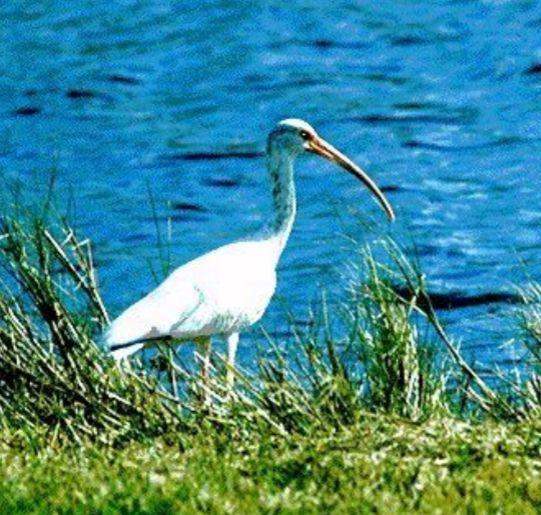 1201 ibis.jpeg