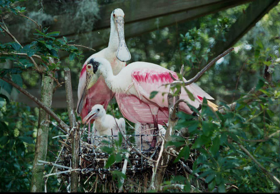 Bill Garvin birds