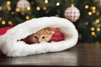 Adopt a kitten this Christmas