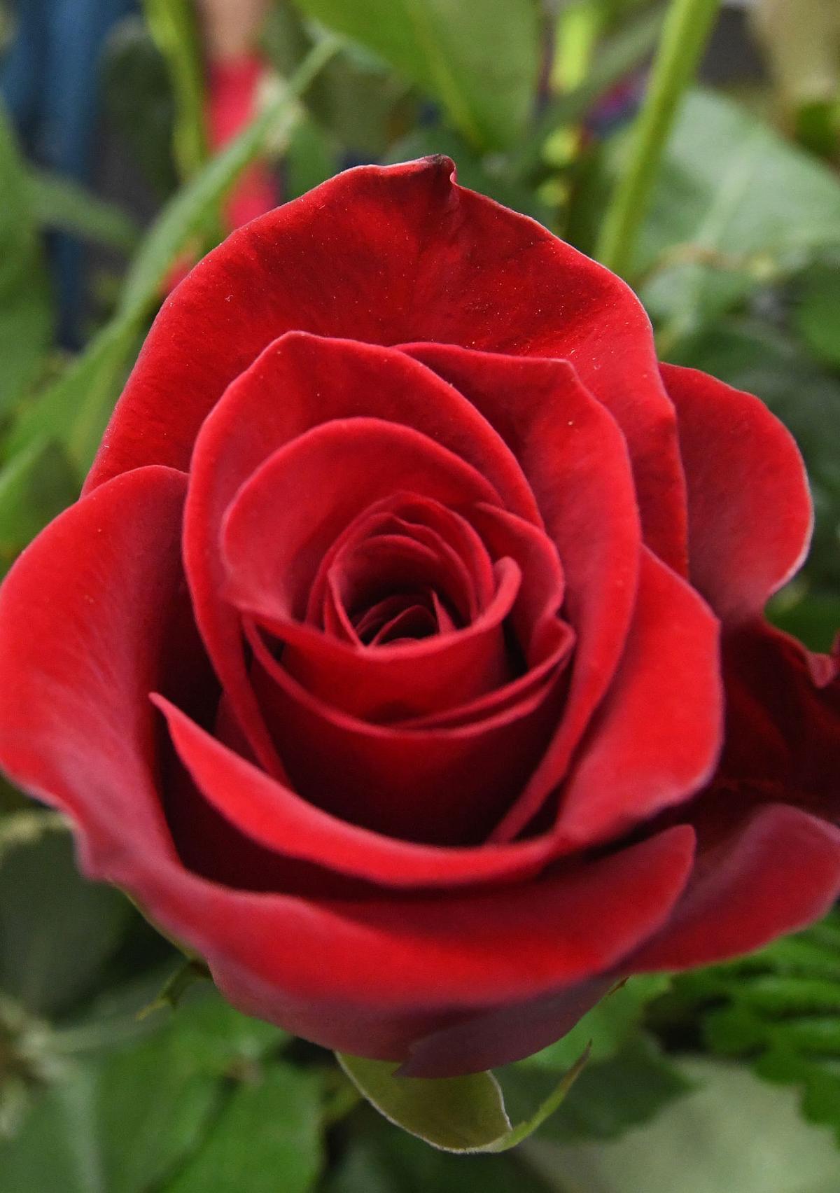 Valentine's Day secondary 2020