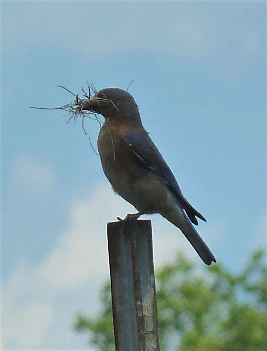 0223 bluebird 2.jpg