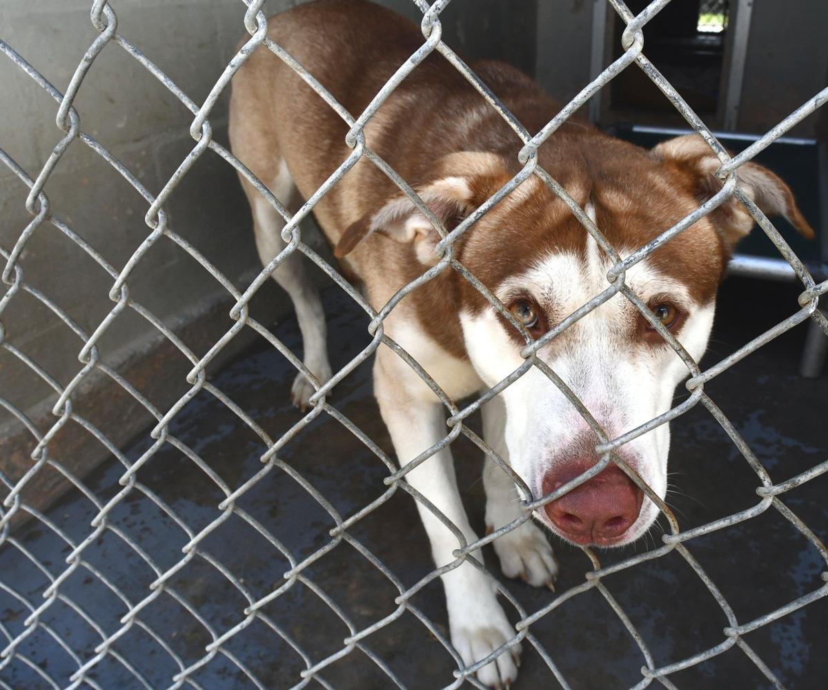 Animal shelter adoptions secondary.jpg