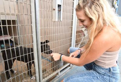 Animal shelter adoptions dominant.jpg