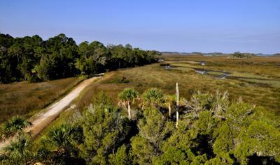 Gulf Hammock dirt road.jpg