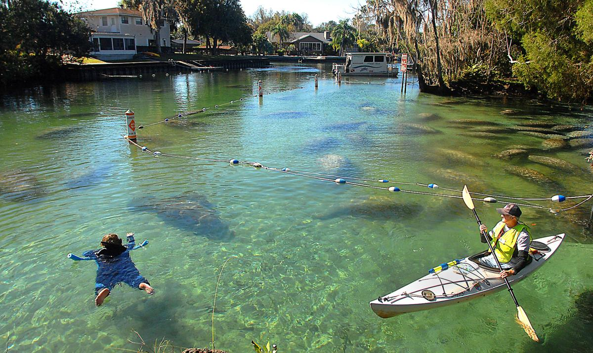 On the water: Manatee tourism 'trending correctly'