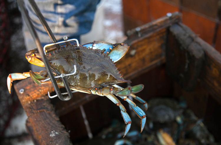 Crabbers head home