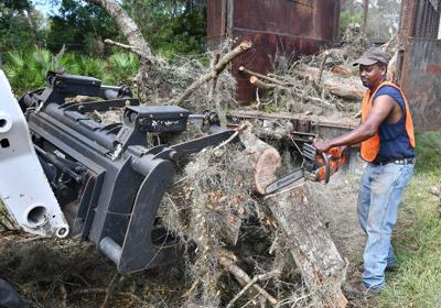 Irma trees clean up contractor