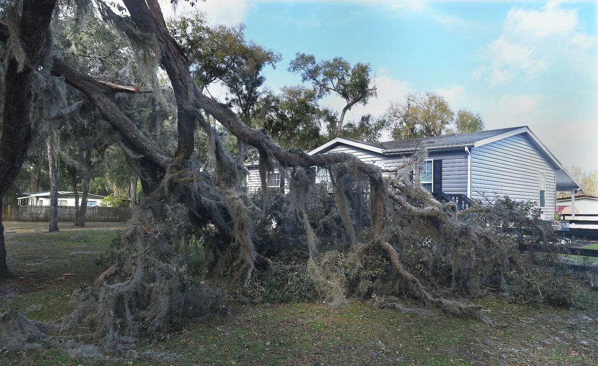 Tree down in Floral City