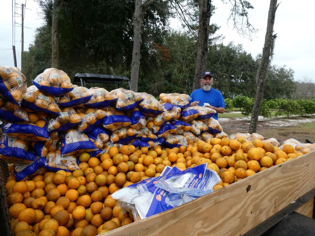 0112 oranges 4.JPG