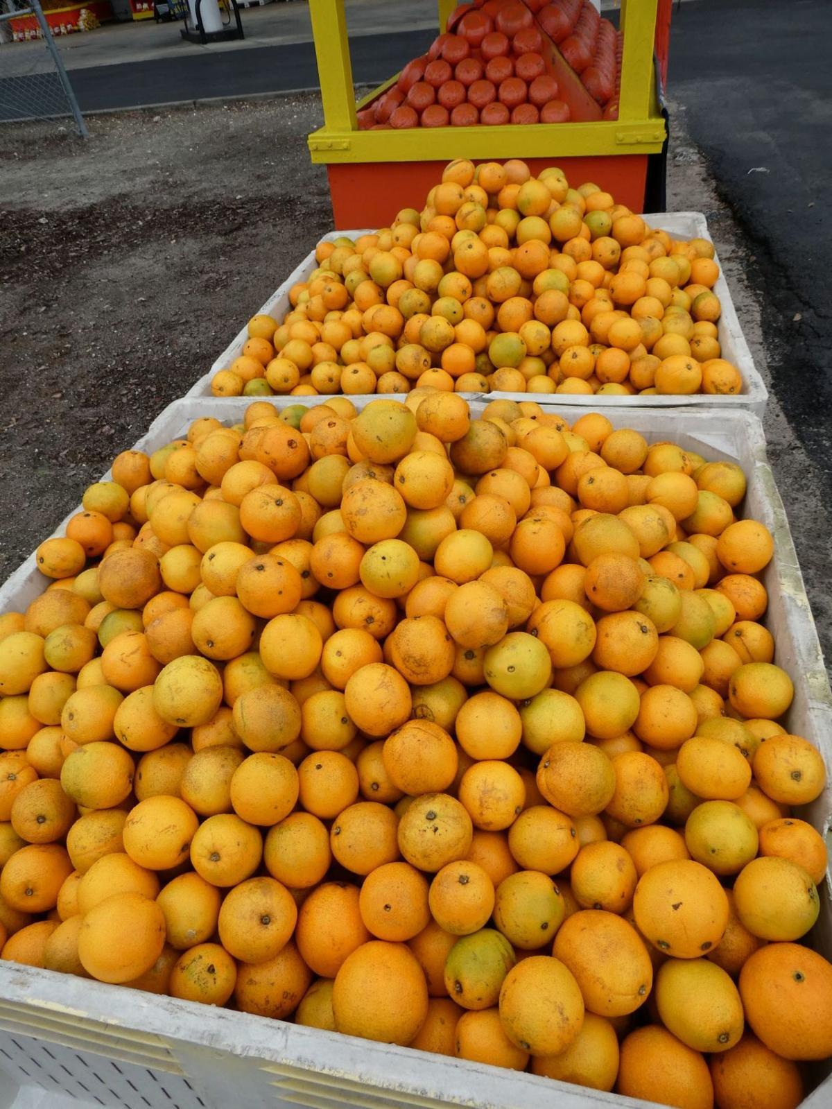 0112 oranges 5.JPG