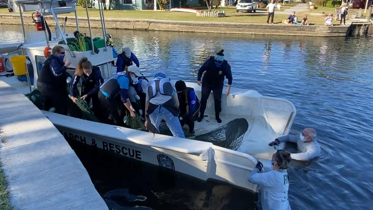 manatee rescue two