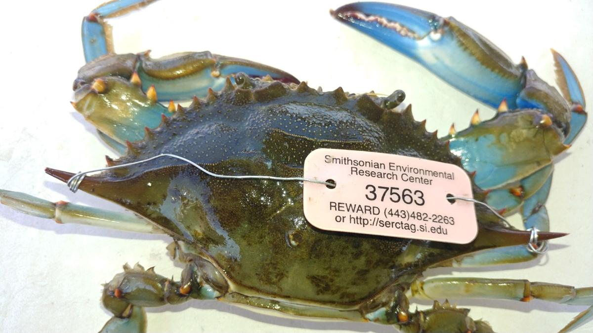 1229 Crab 1 - submitted.jpg