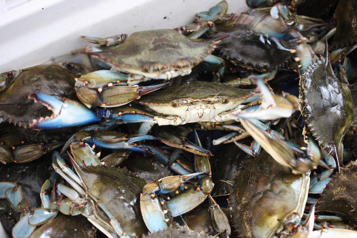 1229 Crabs 2.JPG