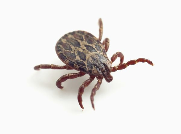 Tick for health 0709