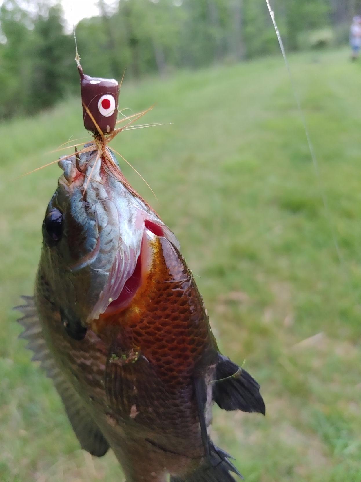 panfish1