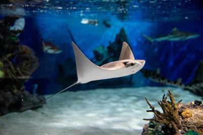 Aquarium adds new exhibits for eventual return