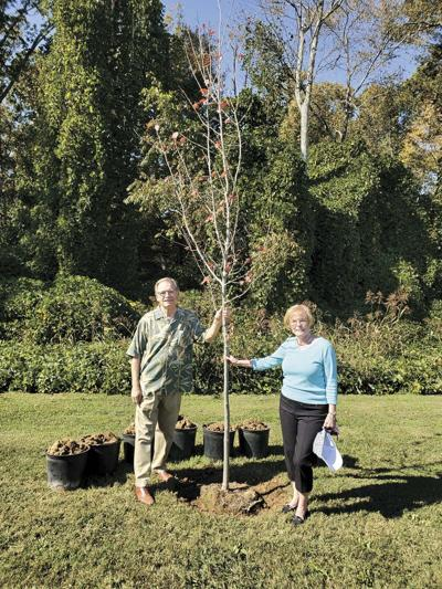 Legacy Tree planted in Hinsley's honor