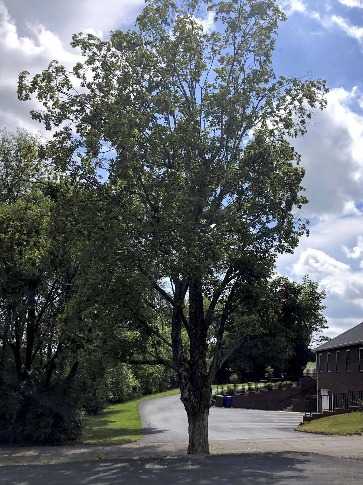08-09 Tree.jpg