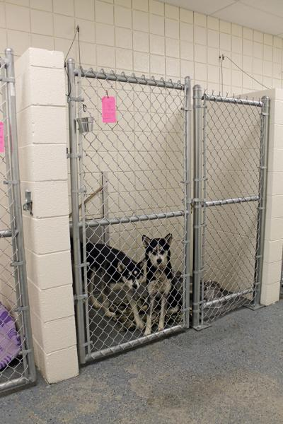 County considering takeover of animal control