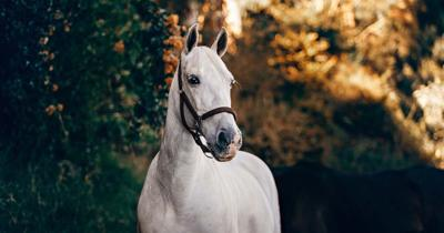 Planners explore allowing horses within city limits