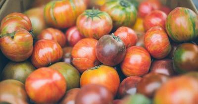 Grainger Tomato Festival  set for Friday, Saturday