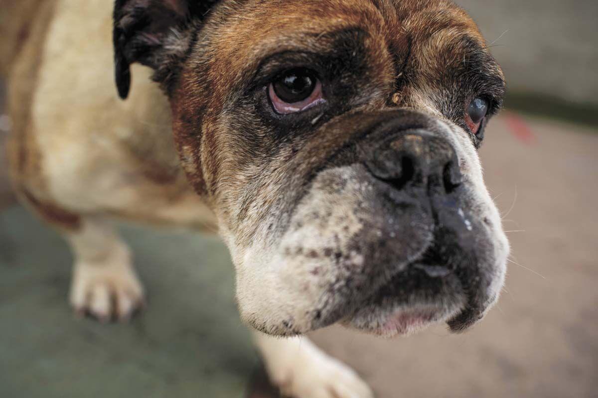 Lost Bulldog Reunion