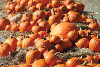 WSCC night planned at Myers Pumpkin Patch