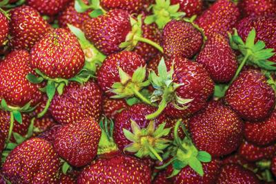 Strawberry Festival is Saturday