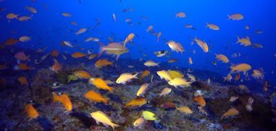 Deep sea coral helps unravel mysteries