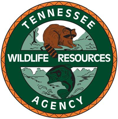 Tennessee Wildlife Resources Agency investigating bear sighting in South Holston Lake area