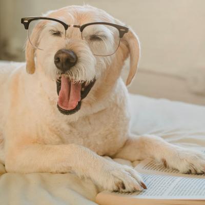 Dog in reading glasses