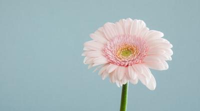 stem-plant-petal