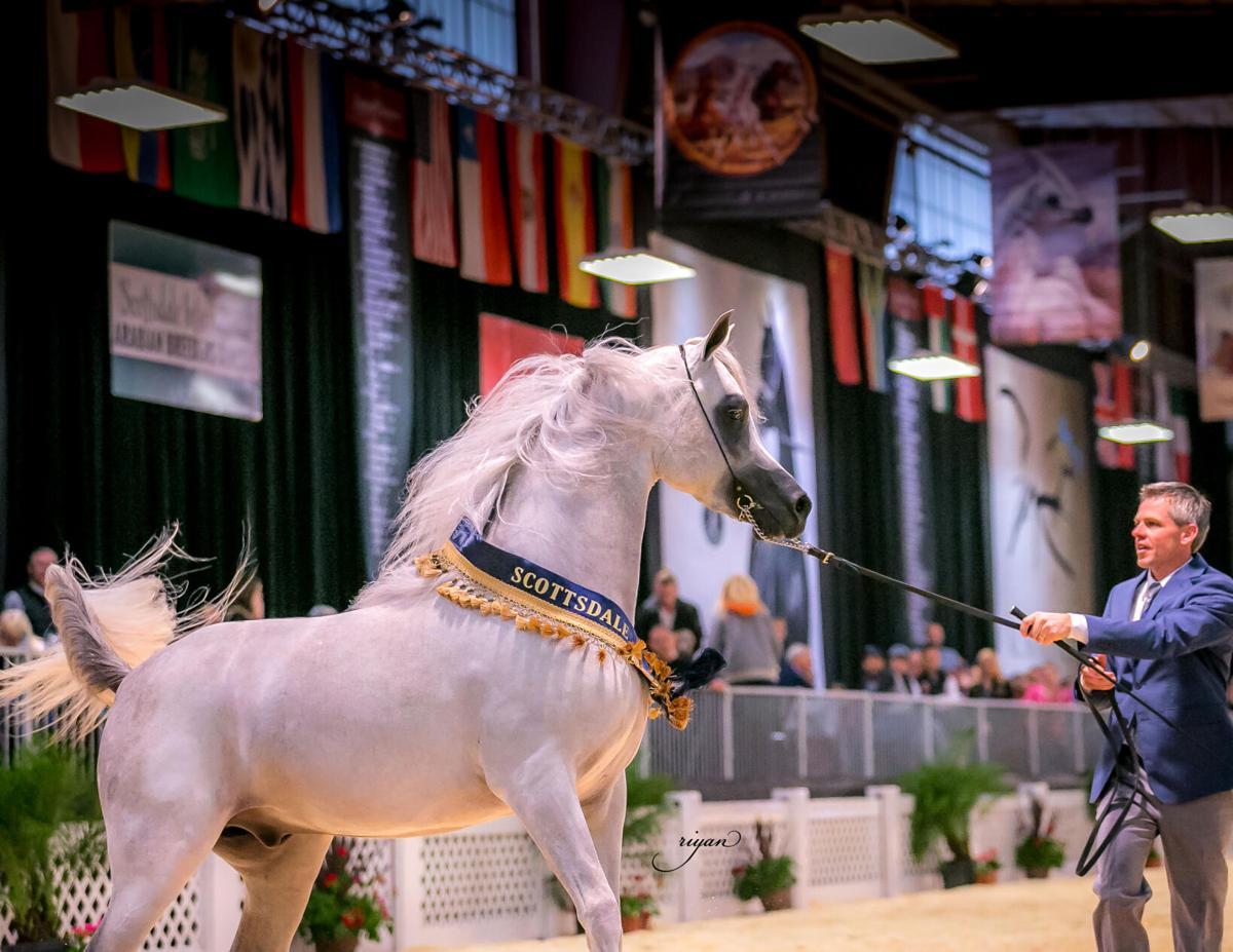 Arabian National Breeder Finals_Ted Carson International 2016.jpg