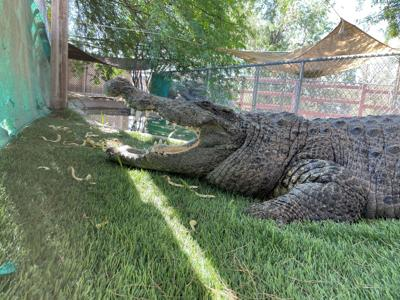 Croc Walk
